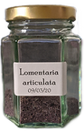 Lomentaria%20articulata1_edited.png