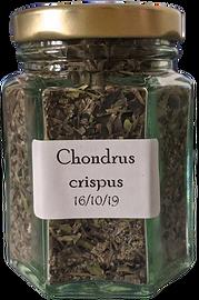 CHondrus%2520crispus_edited_edited.png