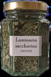 Laminaria%20saccharina_edited.png