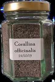 Corallina%20officinalis_edited.png