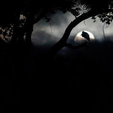 18. Dame de nuit