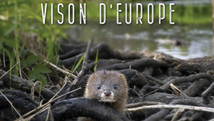 Sauvons le vision d'Europe
