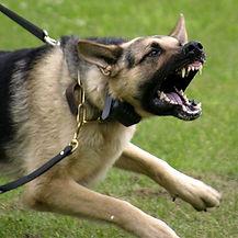 Behavioral Problem Solutions Rocky Junior's Dog Training Service