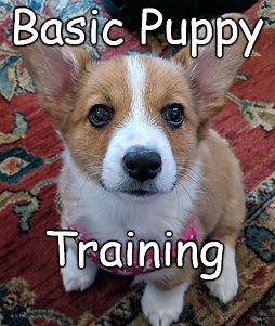 BasicPuppy.jpg