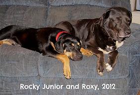 Dog Training Tacoma WA Puyallup WA Rocky Junior's Dog Training Service