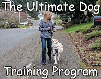 Dog Training Near Me Cost