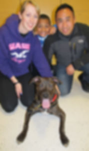 American Pit Bull Terrier Stryker Rocky Junior's Dog Training Service Puyallup WA Dog Training