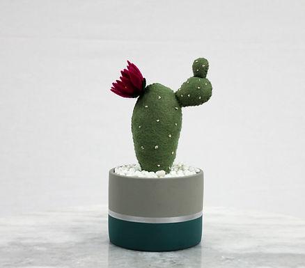 Prickly Pear Cacti GreyPot