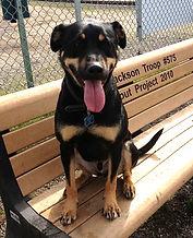 Understanding behavioral problems in dogs Rocky Junior's Dog Training Service Puyallup WA