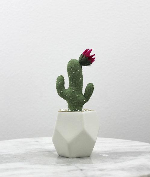 Saguaro Cacti MagentaFlower