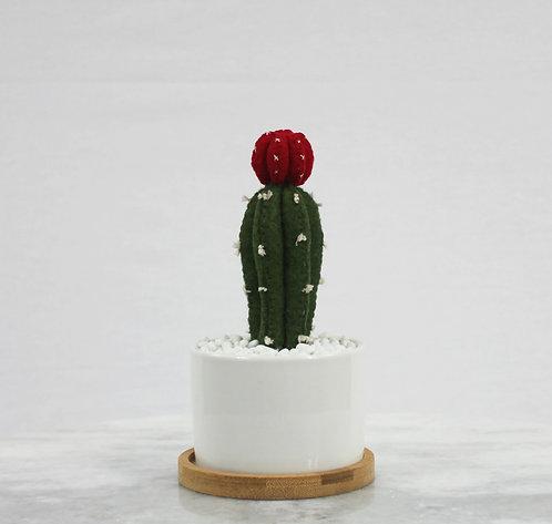 Moon Cacti RoundPot