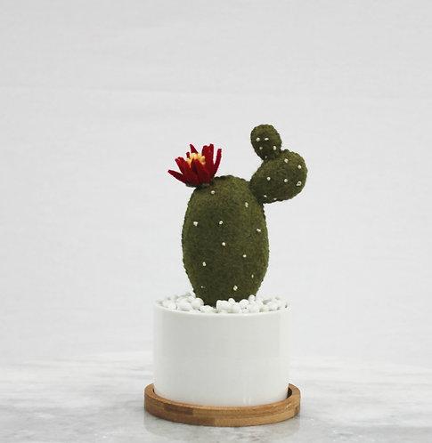 Prickly Pear Cacti White Pot