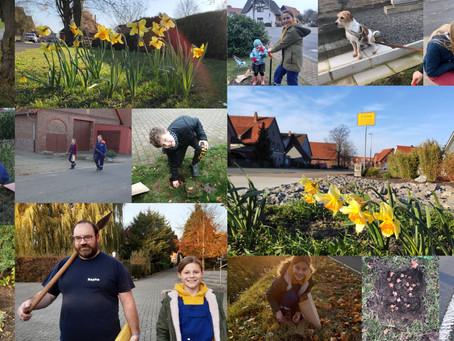 Farbiger Frühling: JF Riehe pflanzt Blumenzwiebeln