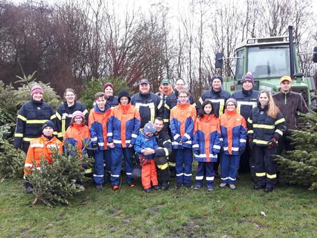 Fleißig, fleißig: Bückeburger Nachwuchs sammelt 2000 Tannenbäume
