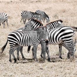 Masaai Mara Reserve