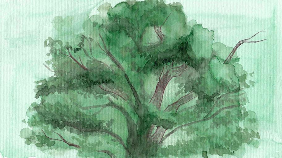 Ipil Tree Background