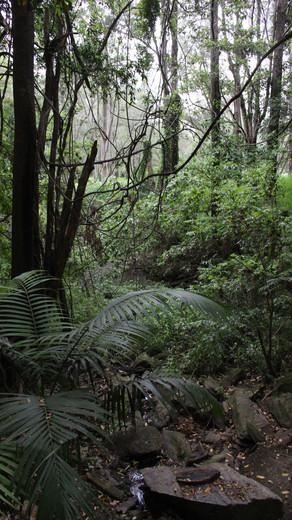 Field Trip 4: Mt Nebo region, Bell Bird walking tracks and Kumbartcho Sanctuary educational centre