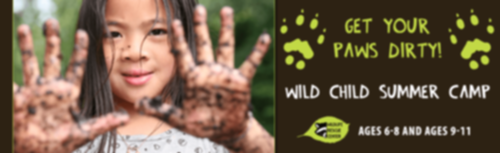 wild child summer camp banner.png