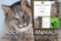 Wildlife Rescue Adopt-An-Animal