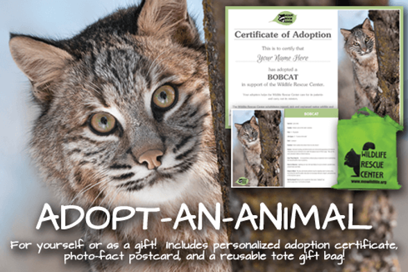 Wildlife Rescue Adopt-An-Animal