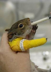 Injured Squirrel