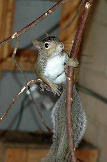 I found an injured squirrel