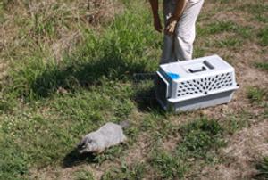 Wildlife Rescue Center Release Site Program