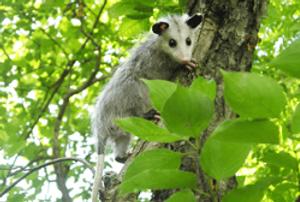 Missouri Wildlife Rescue Center