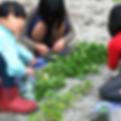 根浜MIND-事業内容-ハマボウフウ1
