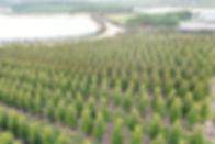 Magnolias0062.JPG