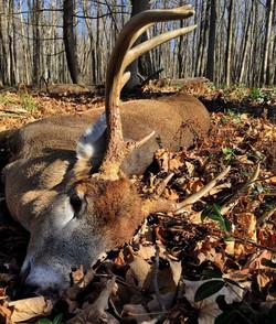 Nice buck!