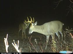 A couple young bucks.