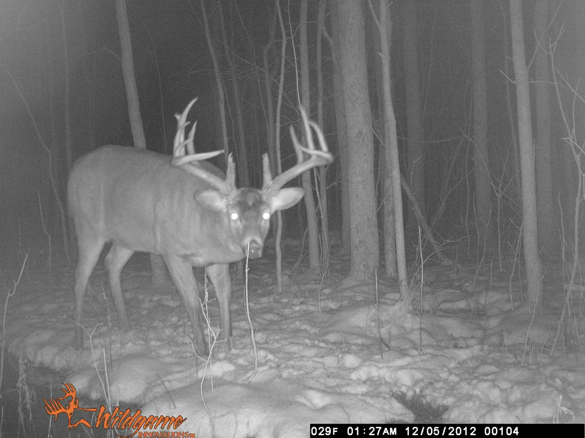 One of our trail camera bucks