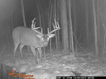 Whitetail Deer Hunting In Ontario