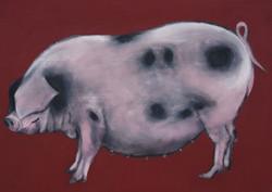 Paillot-Pig