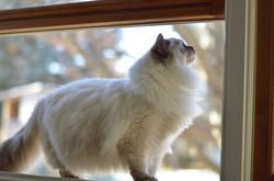Pregnant Mama Cat