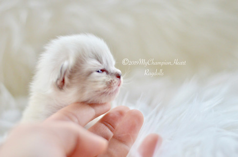 11 day old Hope