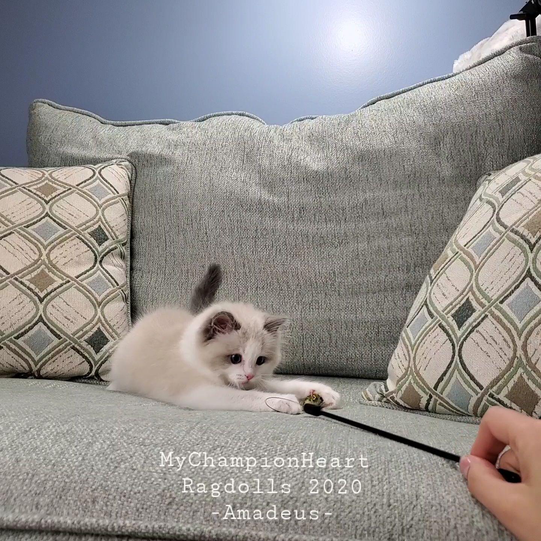 VideoCapture_20200423-214811