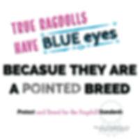 True Ragdolls Have Blue Eyes