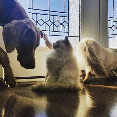 Dog and Cats