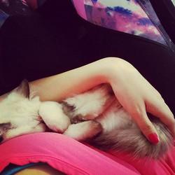 11weeks old Kitten