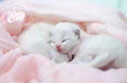 Love + Darrick feb 2020 kittens