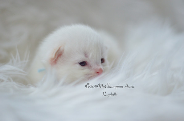 11 Day old