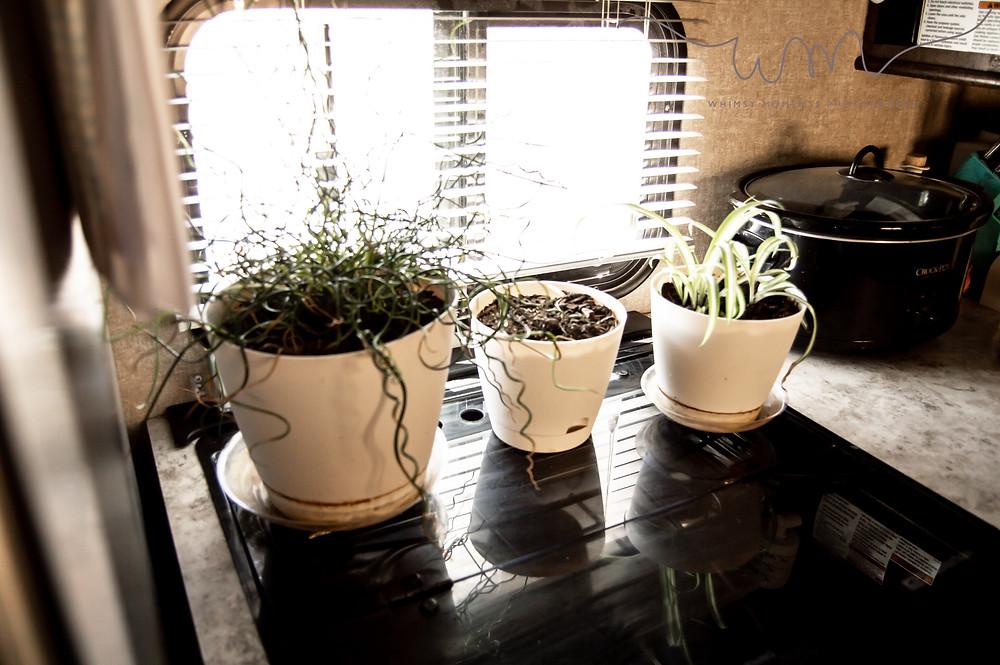 Plants inside camper