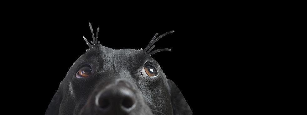 Für umweltbewusste Hundehalter