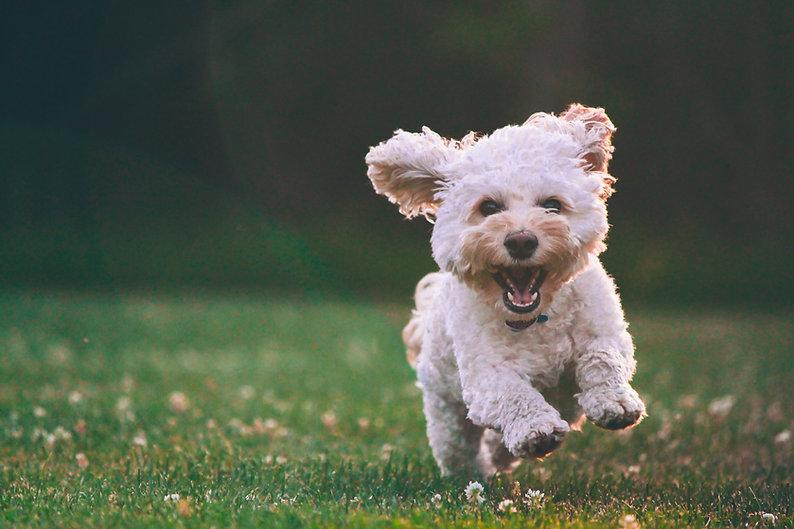 Hppy Dog mit Bio Hundekotbeutel