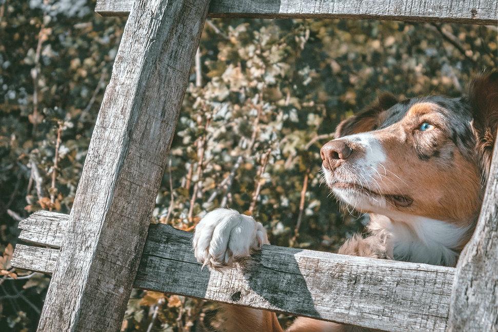 Umwelt und Hund
