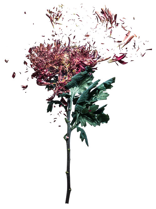Flowerbomb - Michael van Emde Boas
