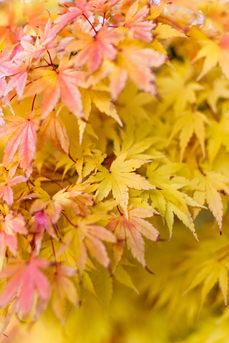 Fall in PNW_Getty (1 of 1).jpg