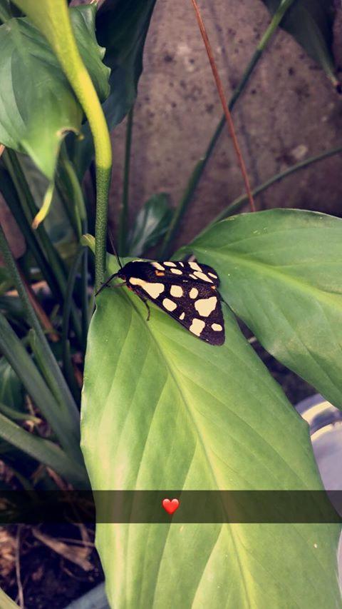 natura esthétique concours photo papillon
